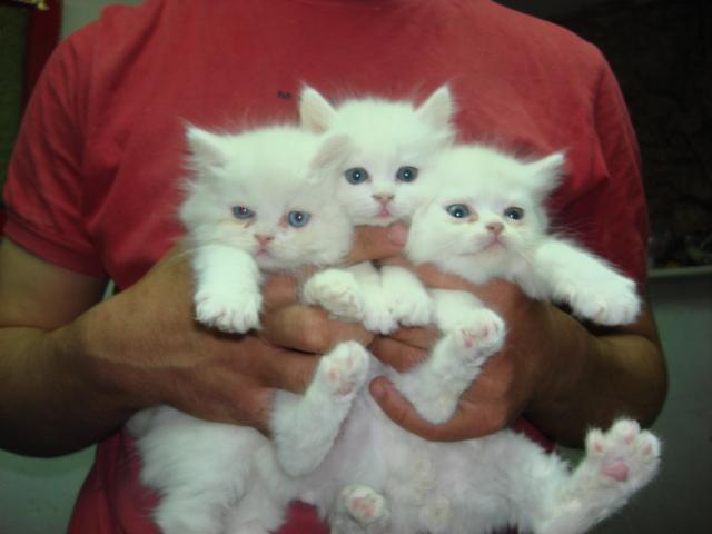 الي محبي القطط 313