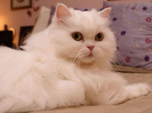 الي محبي القطط 415