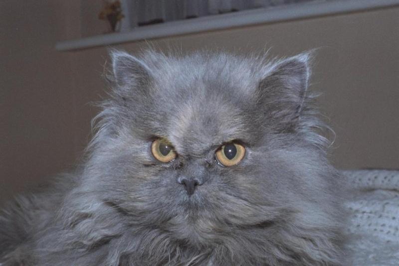 الي محبي القطط 612