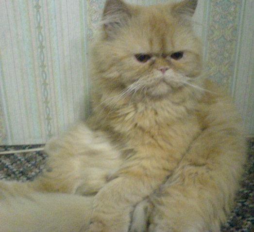 الي محبي القطط 711