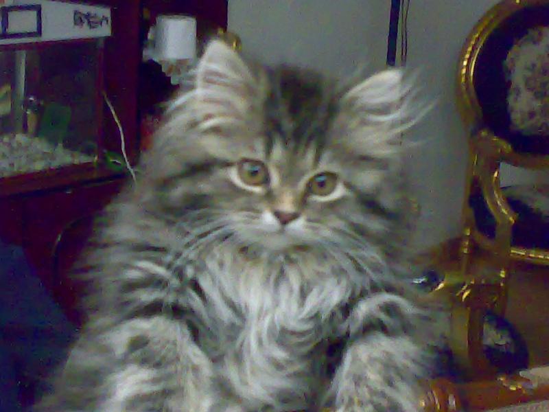 الي محبي القطط 810