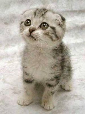 الي محبي القطط 910