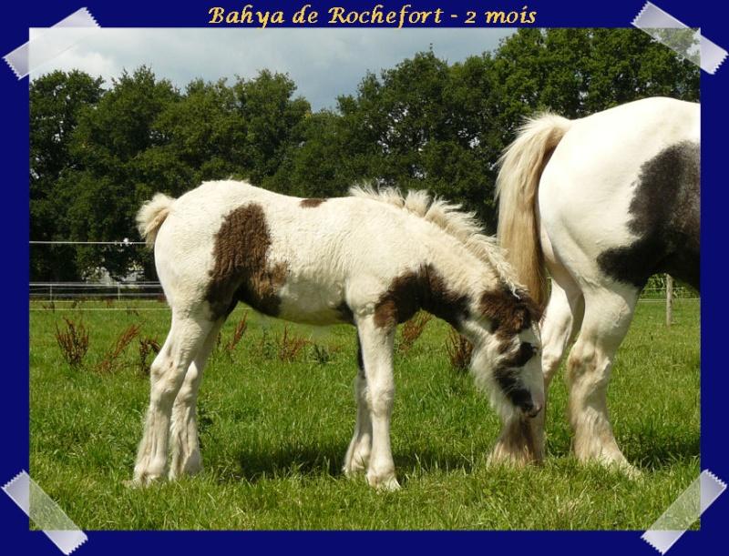 Les poulains du Domaine de Rochefort 2011 !!! Bahyab13