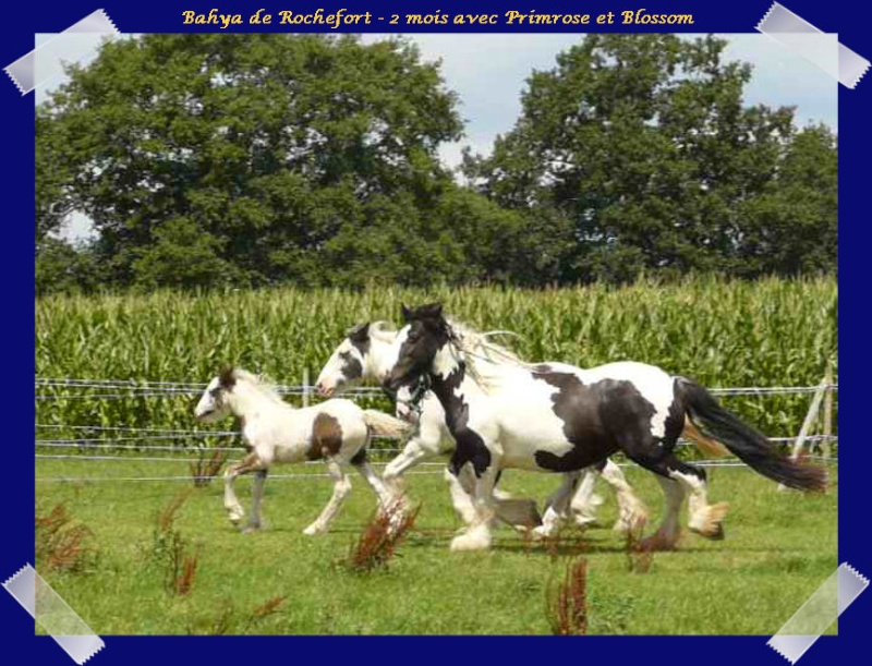 Les poulains du Domaine de Rochefort 2011 !!! Bahyap11