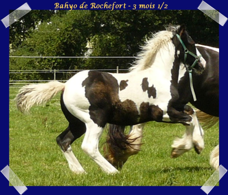 Les poulains du Domaine de Rochefort 2011 !!! Bahyo223