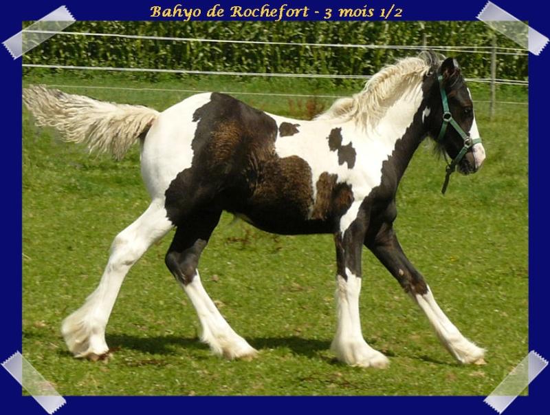 Les poulains du Domaine de Rochefort 2011 !!! Bahyo224