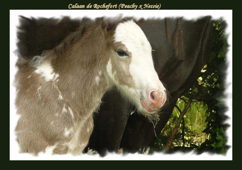 Calaan de Rochefort ! Peachy X Nessie !!!!!! Calaan32