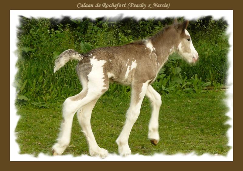 Calaan de Rochefort ! Peachy X Nessie !!!!!! Calaan35