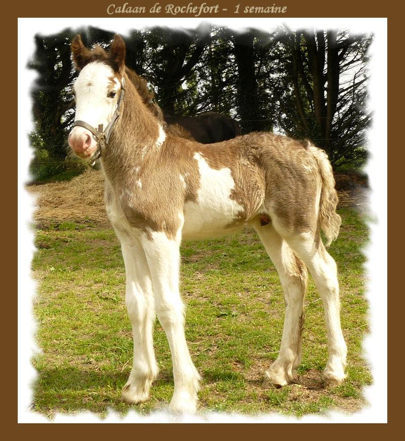 Calaan de Rochefort ! Peachy X Nessie !!!!!! Calaan46