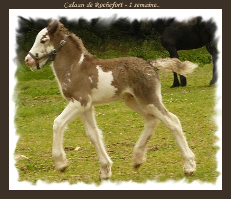 Calaan de Rochefort ! Peachy X Nessie !!!!!! Calaan52