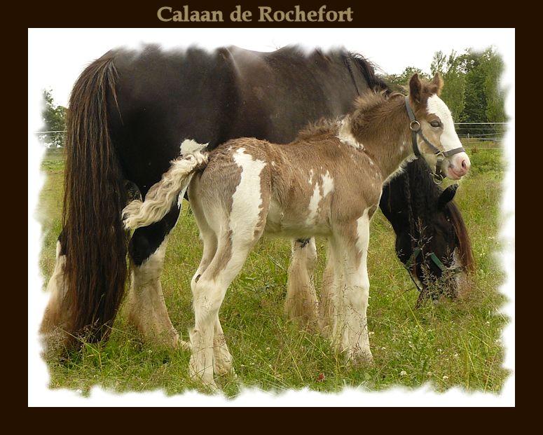 Calaan de Rochefort ! Peachy X Nessie !!!!!! Calaan65