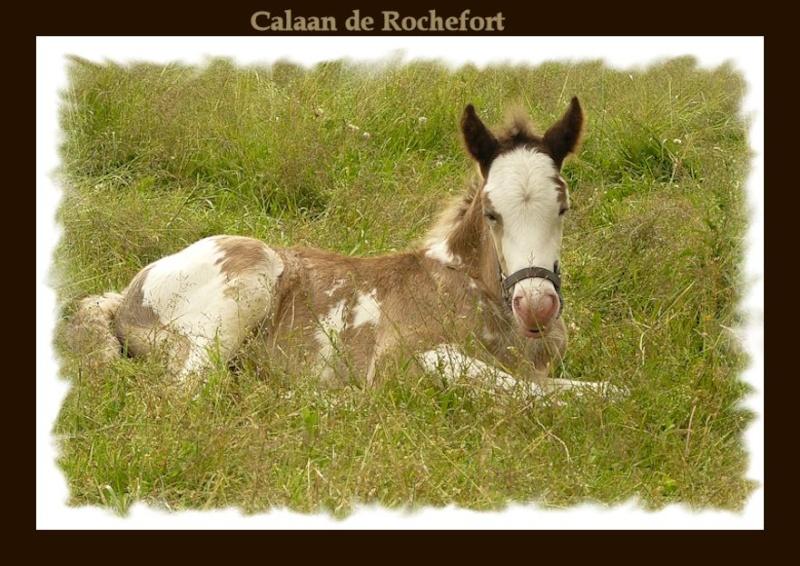 Calaan de Rochefort ! Peachy X Nessie !!!!!! Calaan69