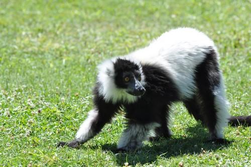 Animal de Martine - 22 mars trouvé par Ajonc Pdf_3710