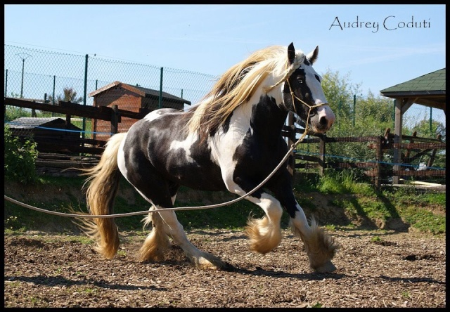 Pleins de nouvelles de mes chevaux, que de changements 39253011