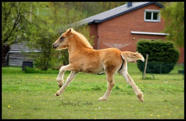 Pleins de nouvelles de mes chevaux, que de changements 40349610