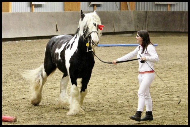 Pleins de nouvelles de mes chevaux, que de changements 41953810