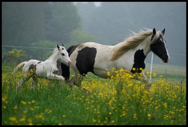Pleins de nouvelles de mes chevaux, que de changements Cap_ta10