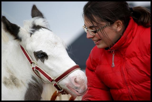 Pleins de nouvelles de mes chevaux, que de changements Captai13
