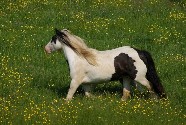 Pleins de nouvelles de mes chevaux, que de changements Hialto16