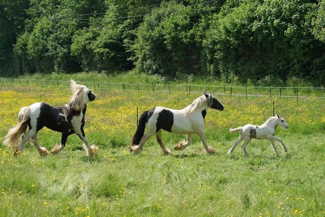 Pleins de nouvelles de mes chevaux, que de changements La_fam10