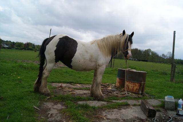 Pleins de nouvelles de mes chevaux, que de changements Luna_310