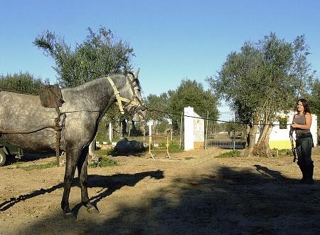 Comandos de Voz e Ensinamento do Cavalo 216