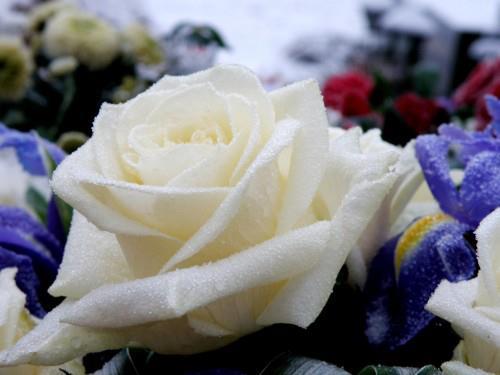 RDC: trois footballeurs du DCMP sont morts dans un accident de circulation à Kinshasa 52438610