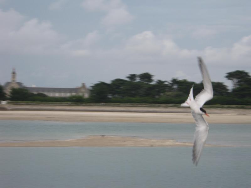 un peu d'air marin Photo_64