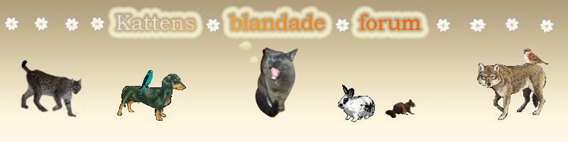 kattens blandade forum