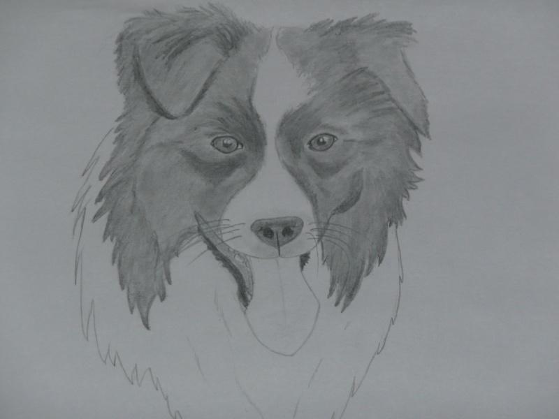 Dessins de chiens - Page 2 P1030120