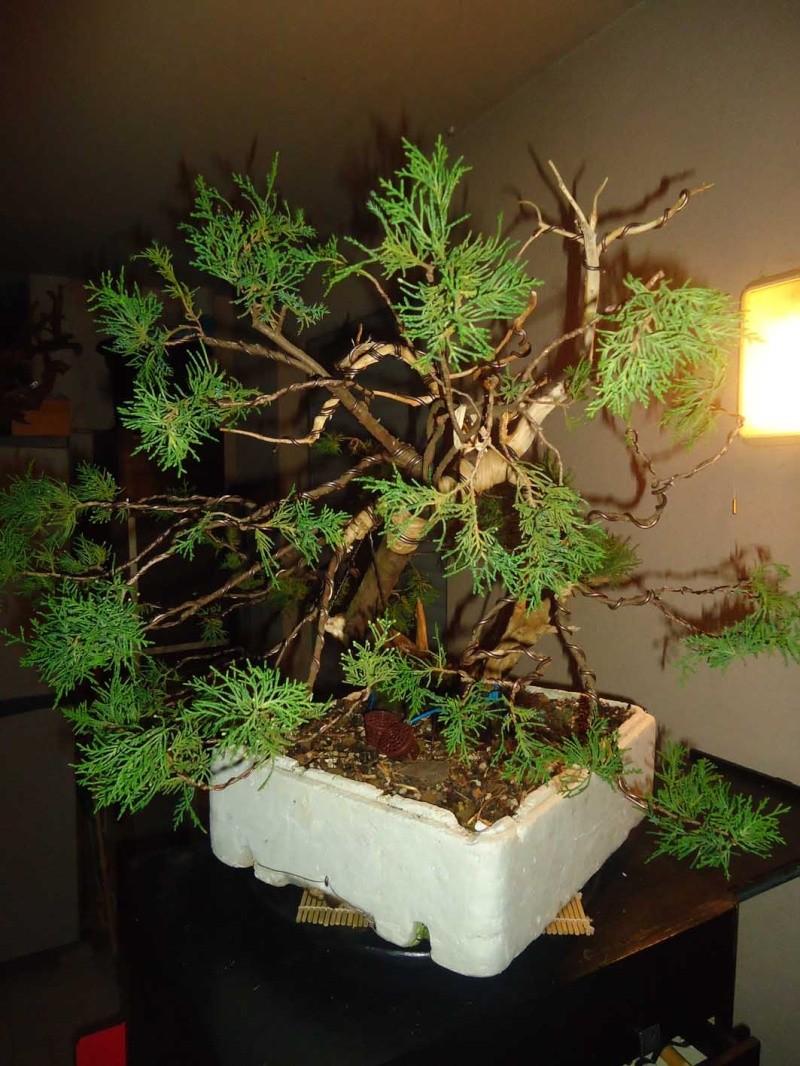 Juniperus Sabina 2011_119