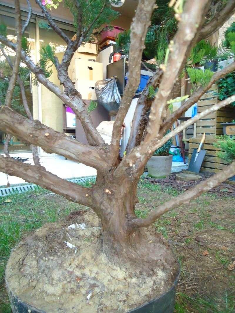 Gros Gros Juniperus 2011_135