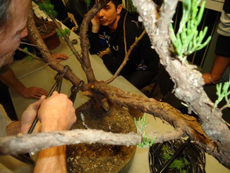 Gros Gros Juniperus 2012_019