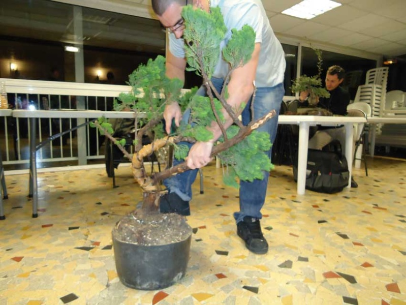 Gros Gros Juniperus 2012_024