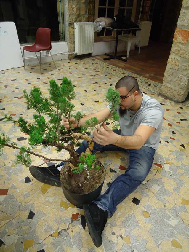 Gros Gros Juniperus 2012_028