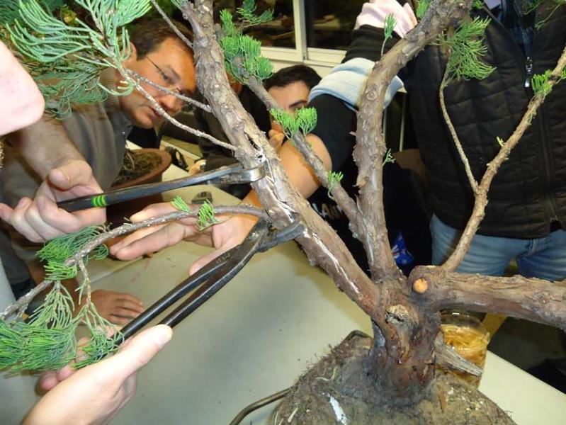 Grosse torsion avec grosses branches 2012_029