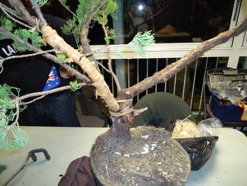 Grosse torsion avec grosses branches 2012_030