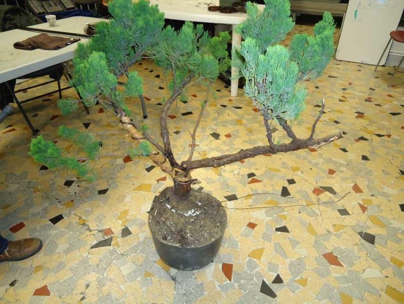 Grosse torsion avec grosses branches 2012_031