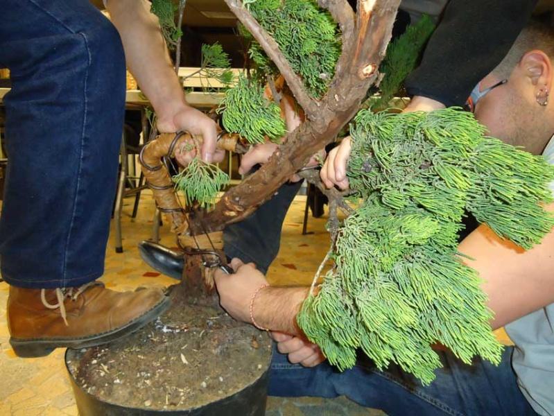 Grosse torsion avec grosses branches 2012_032
