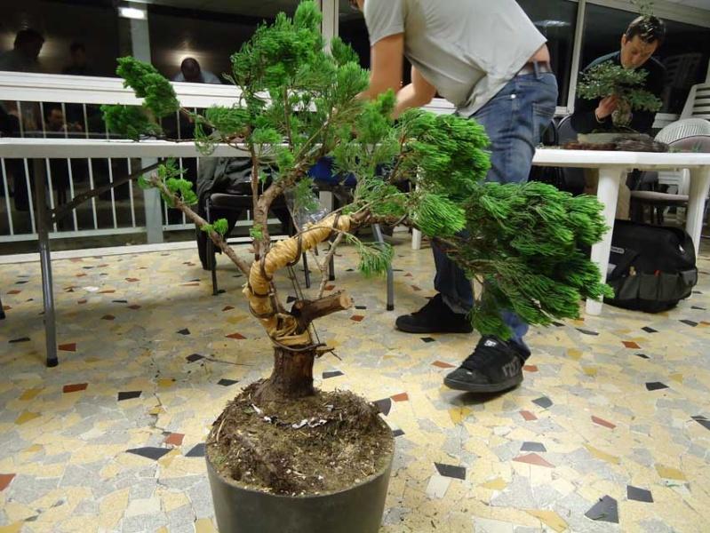 Grosse torsion avec grosses branches 2012_033