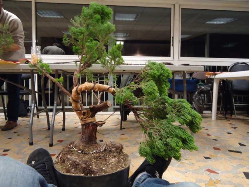 Grosse torsion avec grosses branches 2012_034