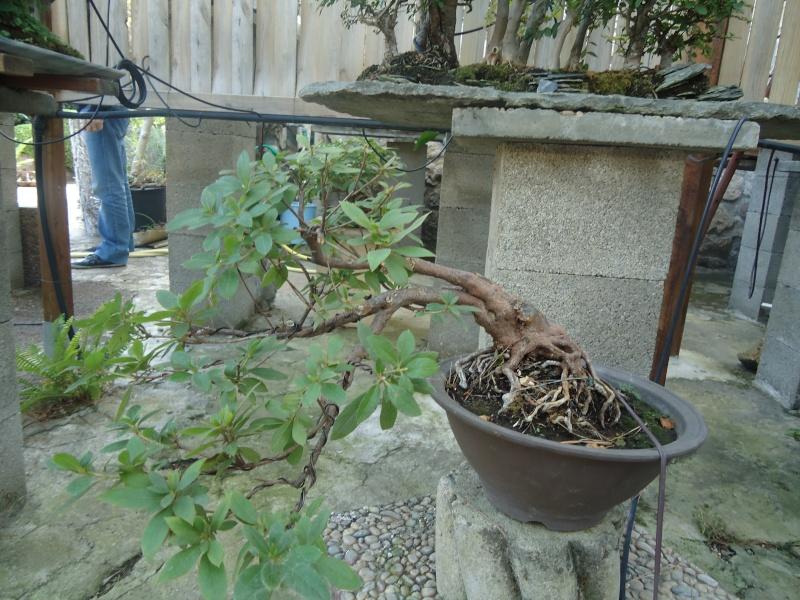 Visite du jardin Jean Pierre Cardinal Dsc09414