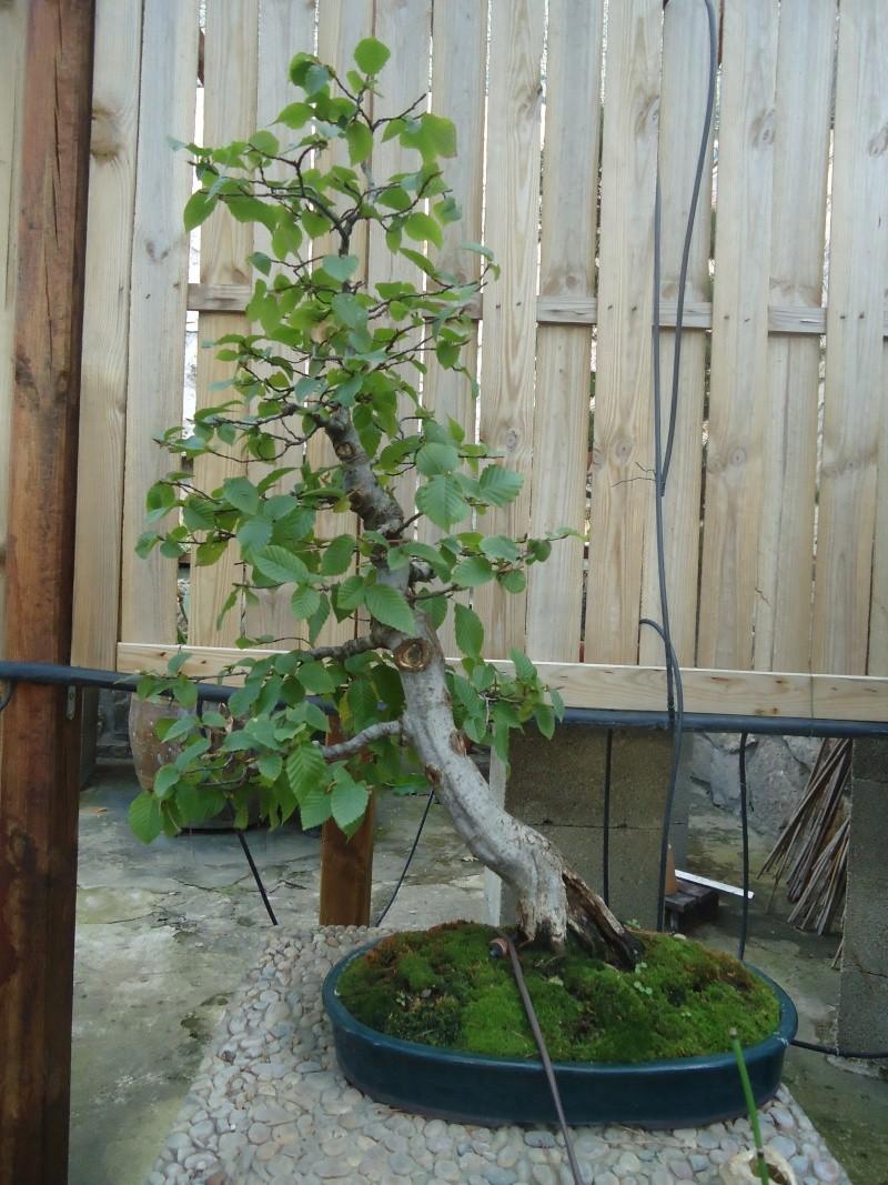 Visite du jardin Jean Pierre Cardinal Dsc09415