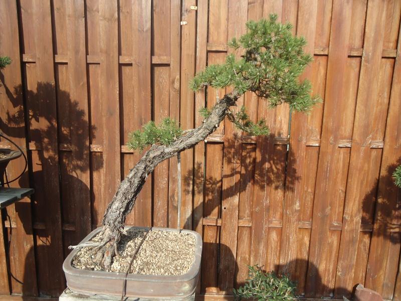 Visite du jardin Jean Pierre Cardinal Dsc09514