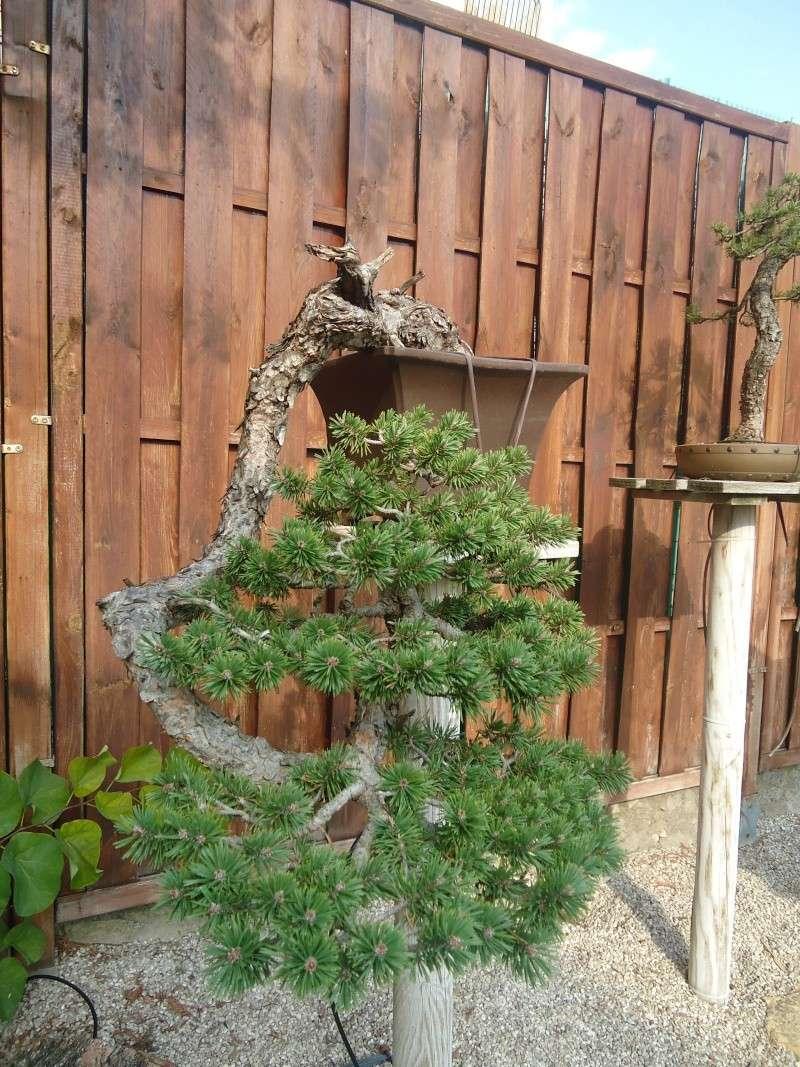 Visite du jardin Jean Pierre Cardinal Dsc09517