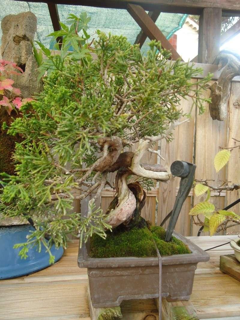 Visite du jardin Jean Pierre Cardinal Dsc09528
