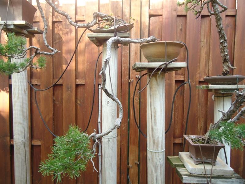 Visite du jardin Jean Pierre Cardinal Dsc09610