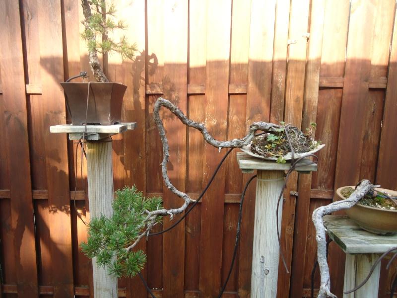 Visite du jardin Jean Pierre Cardinal Dsc09611