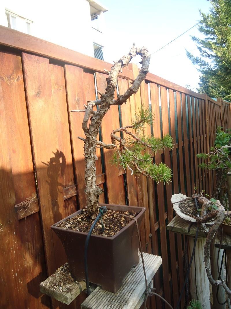 Visite du jardin Jean Pierre Cardinal Dsc09612