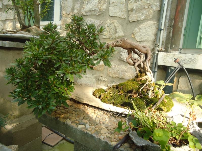 Visite du jardin Jean Pierre Cardinal Dsc09626